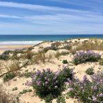 la plage sauvage du Porge océan - gironde
